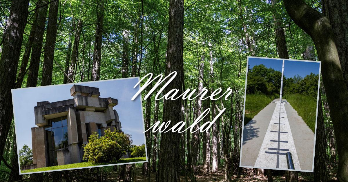 Fotos vom Spaziergang im Maurerwald